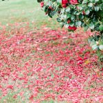 Photos of Rose Petals By Amy O'Boyle
